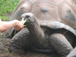 Human-Tortoise Interaction